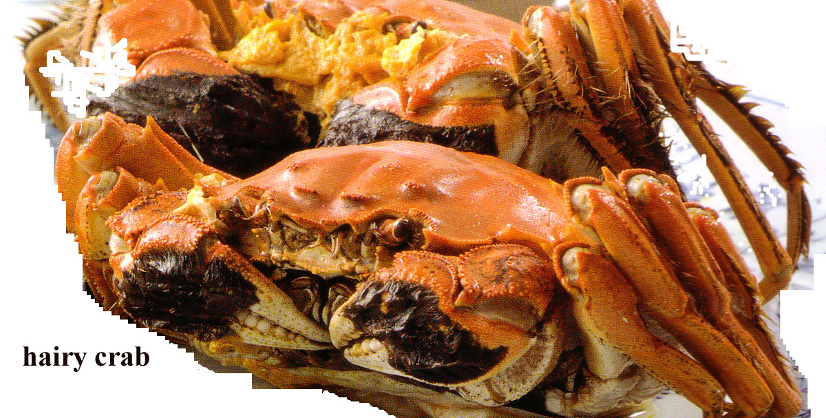 Image Gallery hairy crab